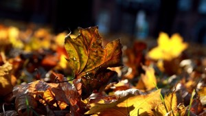 autumn-leaves-wide-wallpaper-34867